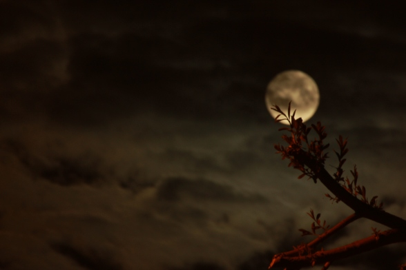 Moon shot by Errol Farrell. 2012